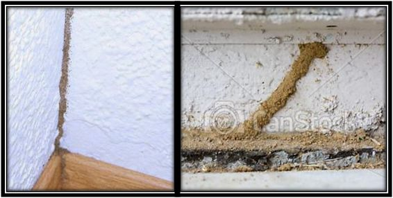 Túneles de termitas dentro de la habitación