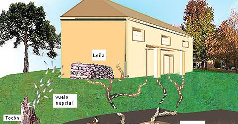 Consejos para evitar que las termitas invadan tu hogar