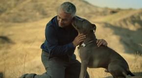 Si las cosas fueran fáciles… – Testimonio del Encantador de Perros