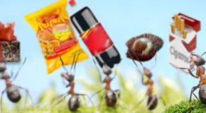 Cuatro pasos para convertir los Gastos Hormiga en una fuente de ahorro